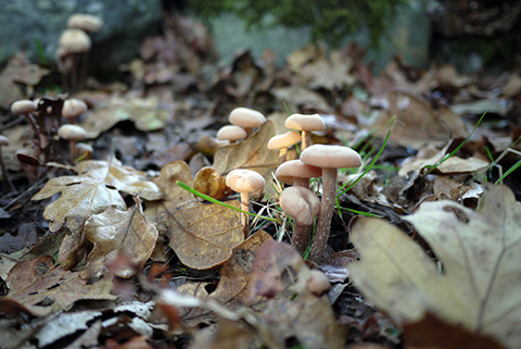 mushrooms3