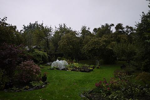 雨のビクトリア