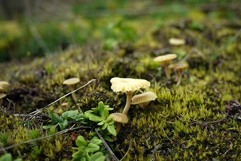 spring_mushroom