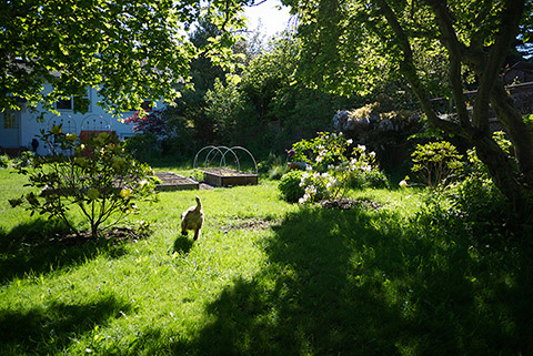 ビクトリア晴れた春の日