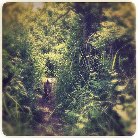 wakinghill2
